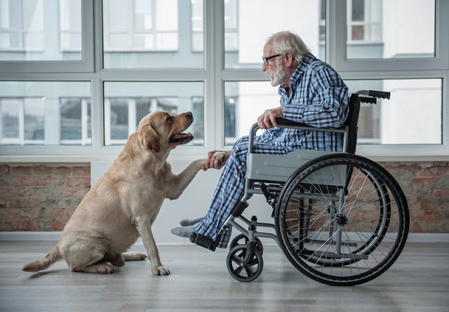 pet therapy for elderly